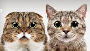 Steriliseeri ja kastreeri oma kassid ja koerad soodsamalt! – 2017. a kampaania