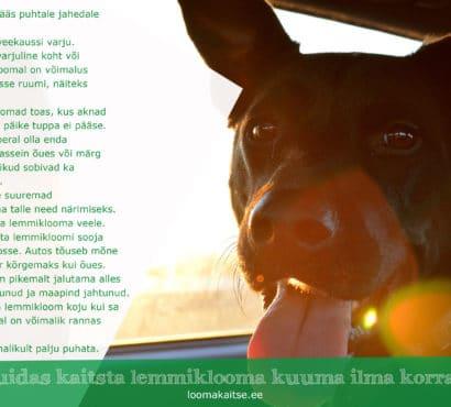 Pressiteade: Kuidas kaitsta lemmiklooma kuuma ilma korral?