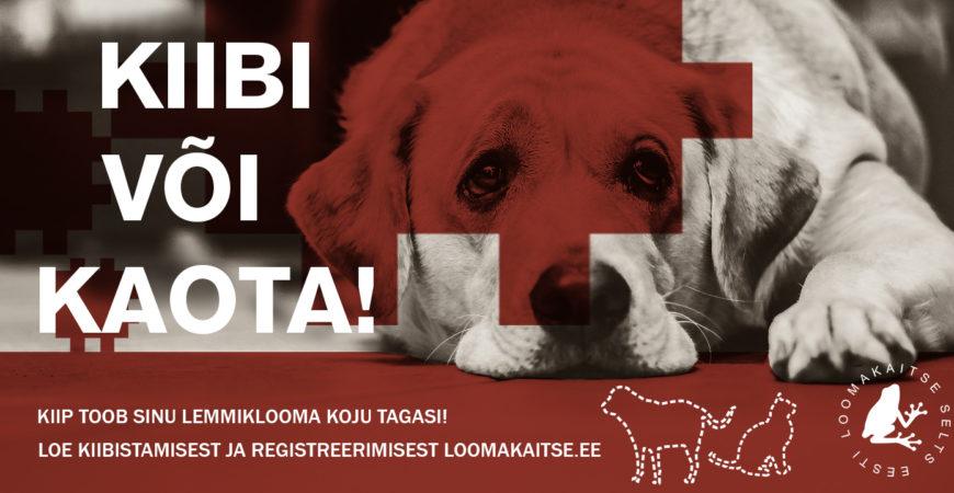 5 põhjust miks on lemmikloomade kiipimine ja registreerimine oluline