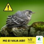 """Linnupojad: """"Aitäh, et hoolid, aga me ei vaja abi!"""""""
