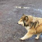 Omakohus: kohalikele ohtlik hulkuv koer tapeti ammuga