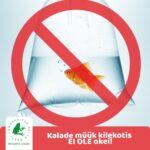 Kilekotis kalade müük on ohtlik ja surmav trend