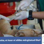 Mida teha, et koer ei sööks mürgitatud liha?